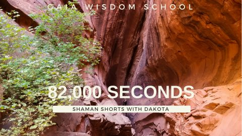 [Shaman Short 010]   82,000 Seconds
